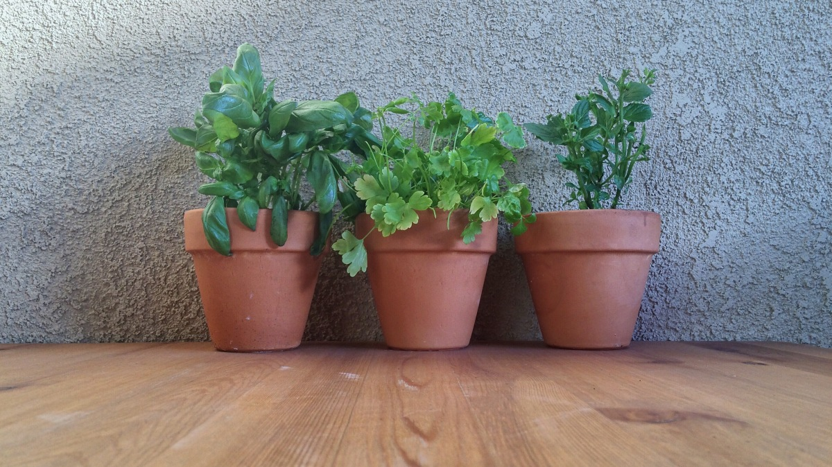 Growing Your Own FreshHerbs